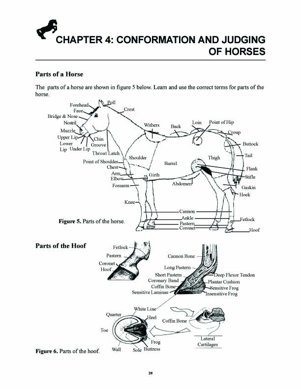 Does Equine Hoof Shape Have An Effect On Soundness?