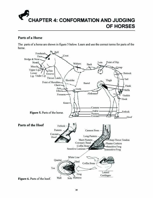 Back Horse Conformation Diagram Horse Head Conformation Wire Diagrams