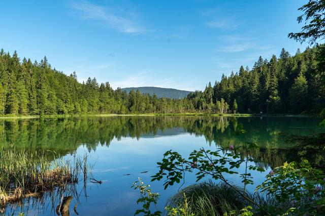 Almwanderung Inzell | Bergwald- Erlebnispfad - Frillensee - Steineralm 09