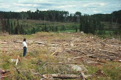 Preguntas y respuestas Cambio Climático