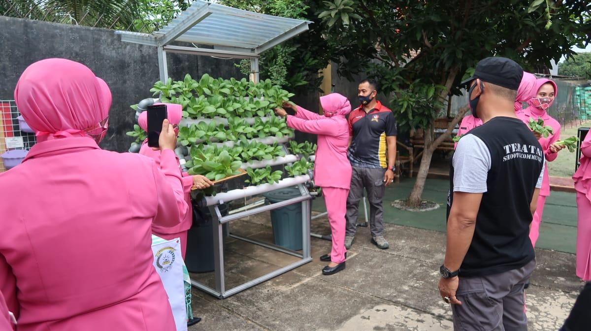 Bhayangkari Batalyon A Pelopor Berbagi Hasil Panen Sayuran Tanaman Hidrophonik