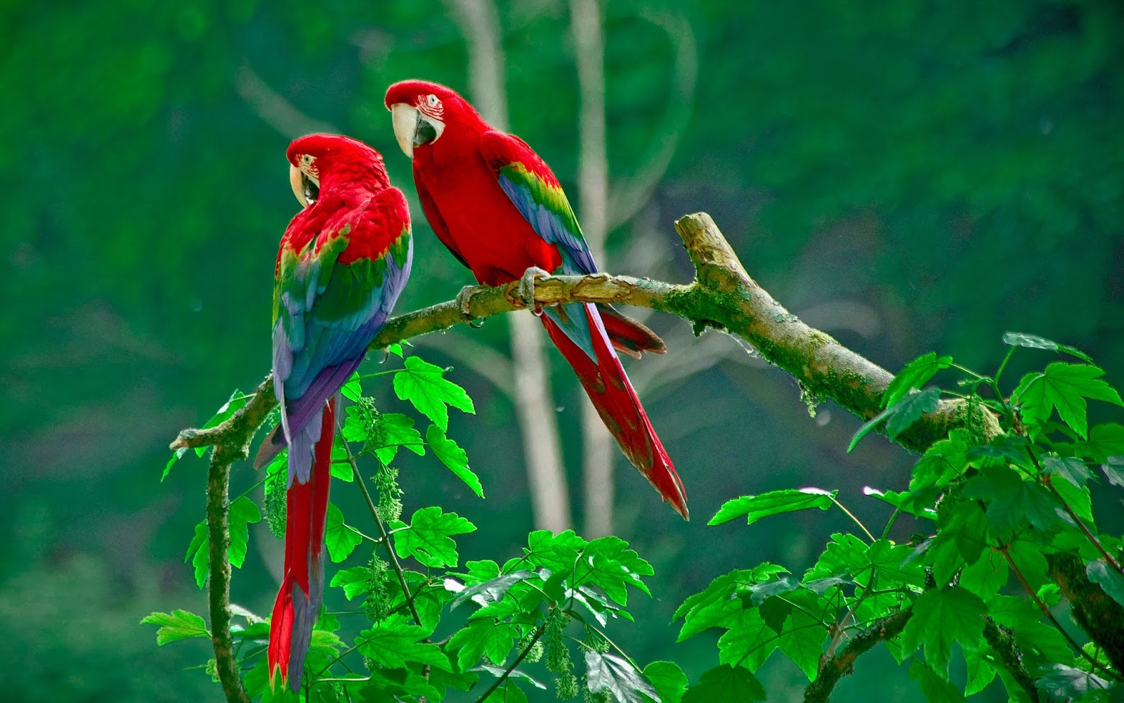 51 Birds Hd Wallpaper Love Bird Photos And Wallpaperimage Top Hd