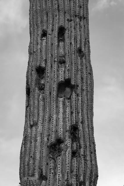 Saguaro, Saguaro National Park
