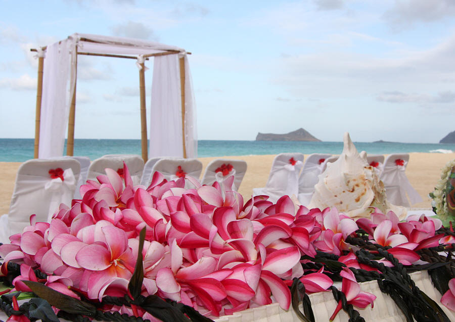 Beach Wedding Arch Ideas: Aloha Bridal Gallery: Creative Beach Wedding Arches