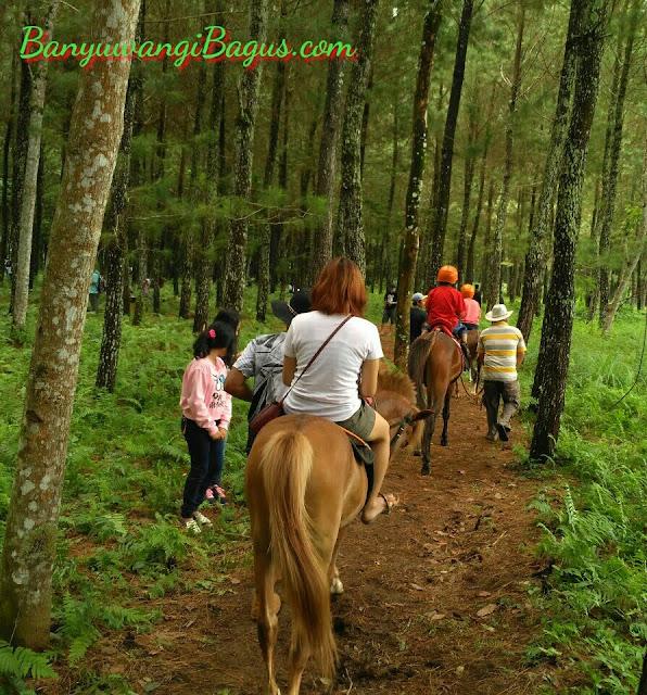 Wisata pinus Banyuwangi.