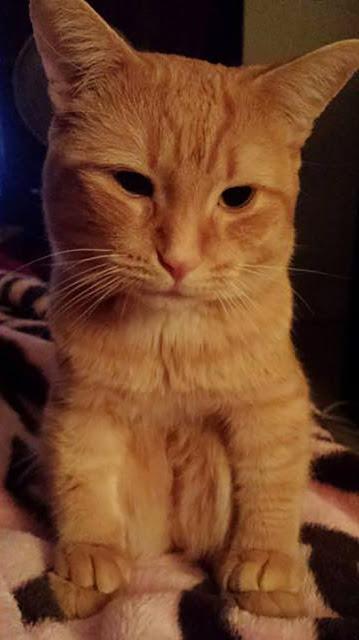 Nhìn mặt thộn của 18 em mèo ngồi xổm kiểu táo bón, không cười không lấy tiền