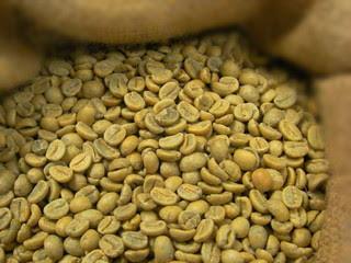 cara-fermentasi-biji-kopi.jpg