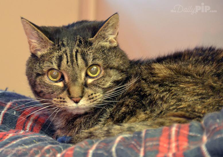 Adopting and rehabilitating an abused cat