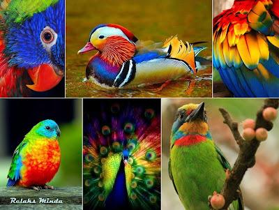 warna warni hidupan ketenangan