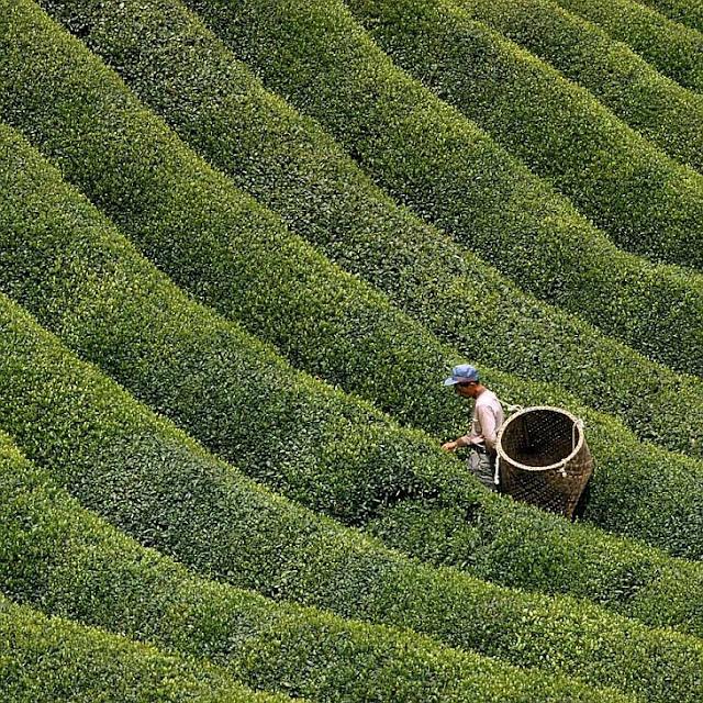 Жизнь в зеленом цвете