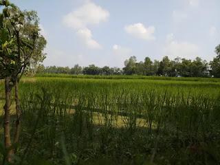 Crop field images