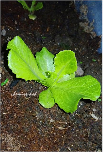 gardening, home, home and living, organic farming, organic vegetables, soils for urban gardening, urban gardening,