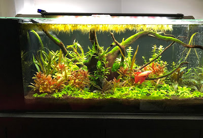 How To Setup Natural Planted Aquarium with Live Plants?