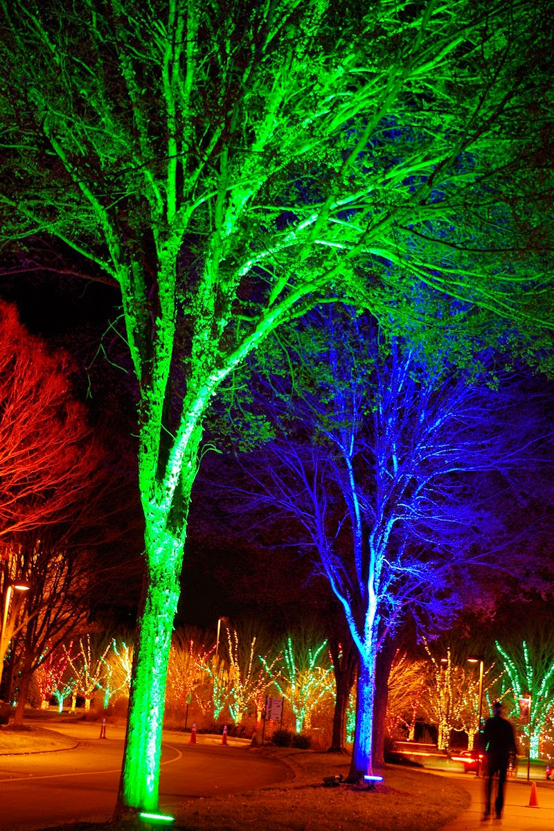 Winter Lights Dazzle The N C Arboretum. Appealing Christmas Lights In  Asheville ...