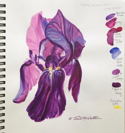 Dark Angel Iris Sketch ©2020 TinaM.Welter