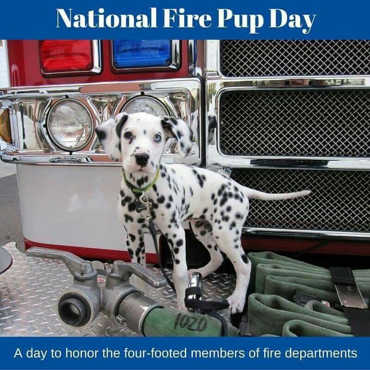 National Fire Pup Day Wishes Lovely Pics