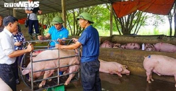 Thủ tướng càng chỉ đạo giảm, giá lợn càng tăng: Vì sao lại có tình trạng trên bảo dưới không nghe?