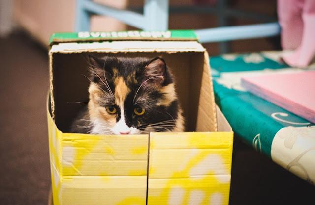 Foto de um gato dentro de uma caixa amarela