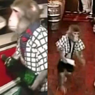 monkey on suit