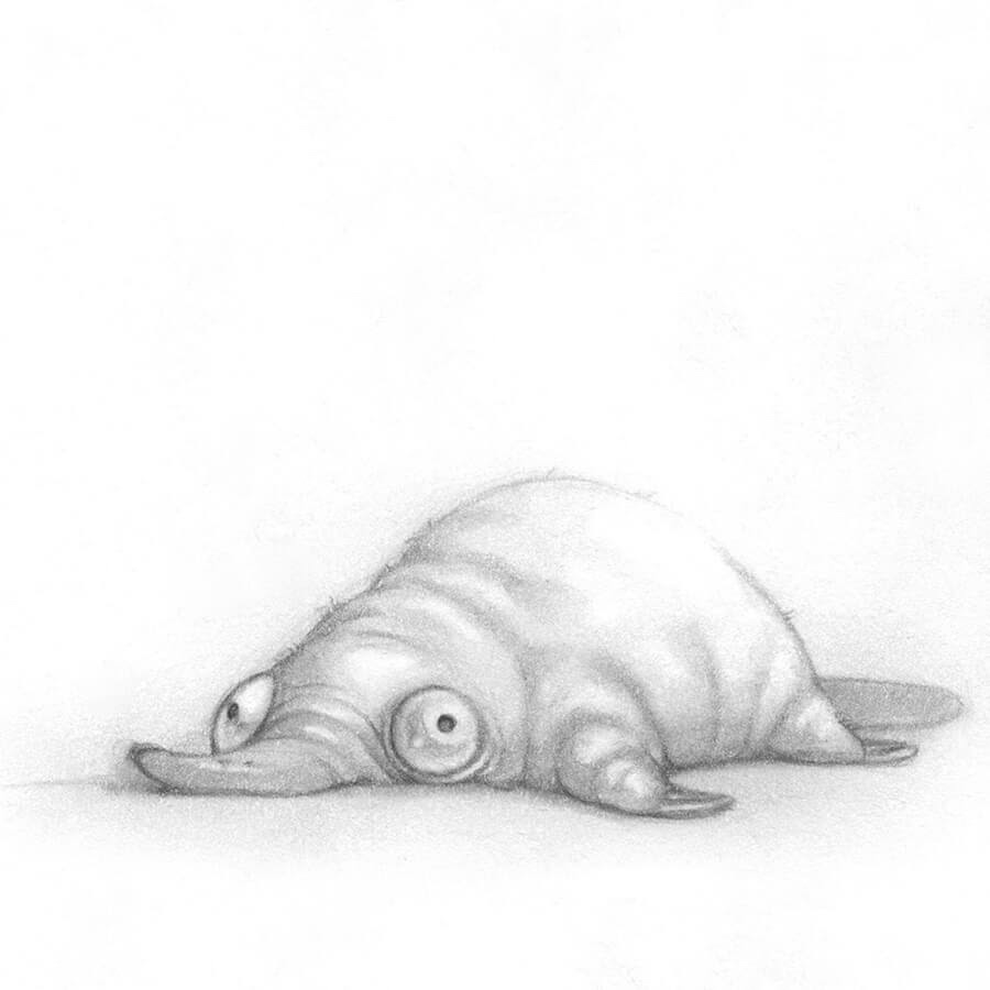 06-A-deflated-platypus-Stella-Bialek-www-designstack-co