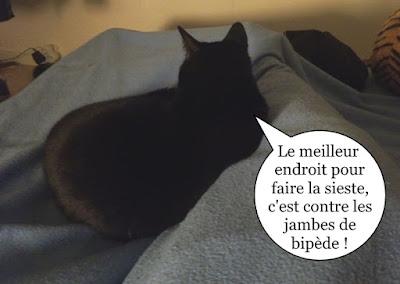 Jazzman, chat noir qui fait la sieste.