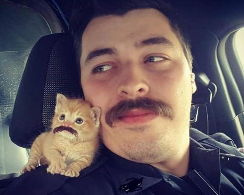 Mustachioed Pair