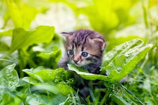 Zatrucie cebulą u kotów