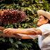 Mulheres do Café ajudam famílias prejudicadas pela geada