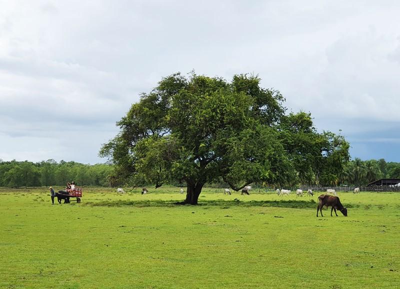 Tour Ilha de Marajó