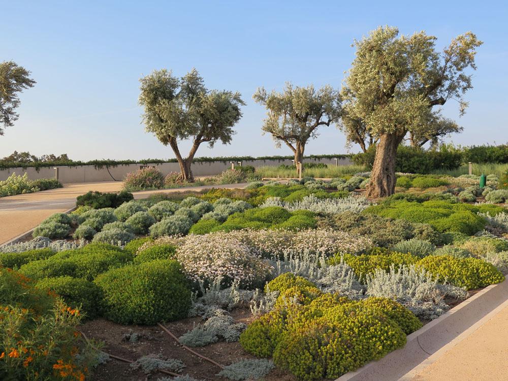 Jardín plantado solo con especies mediterráneas tolerantes a la sequía