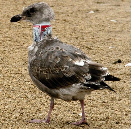 Resultado de imagem para animais vítimas da poluição