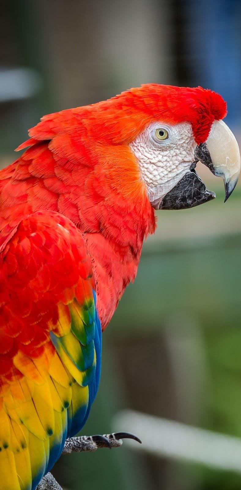 Beautiful macaw.