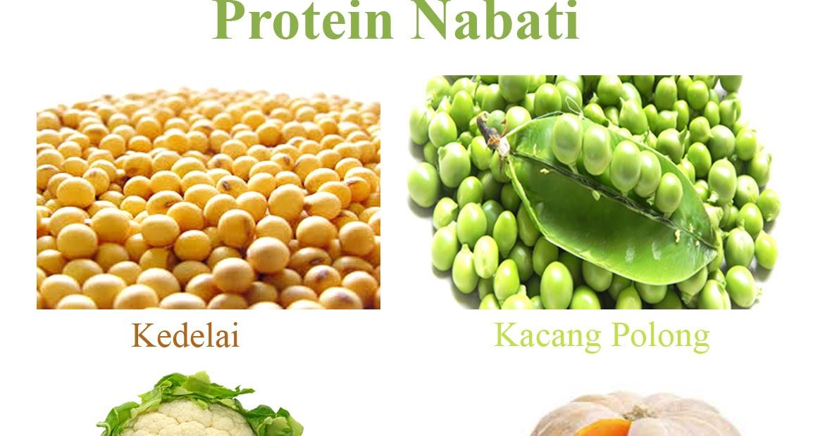 Fungsi Protein Bagi Tubuh Manusia