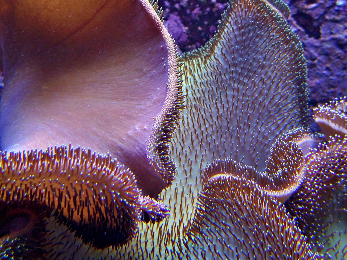 3 Blumenbilder und ein Aquarienbild aus der Wilhelma