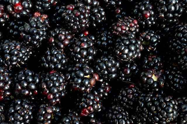 BENEFITS OF BLACKBERRIES