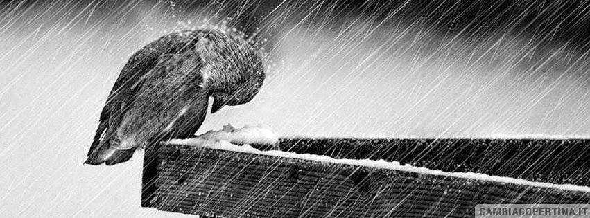 Guerriero della luce attimi di pioggia for Sotto la pioggia ombrelli