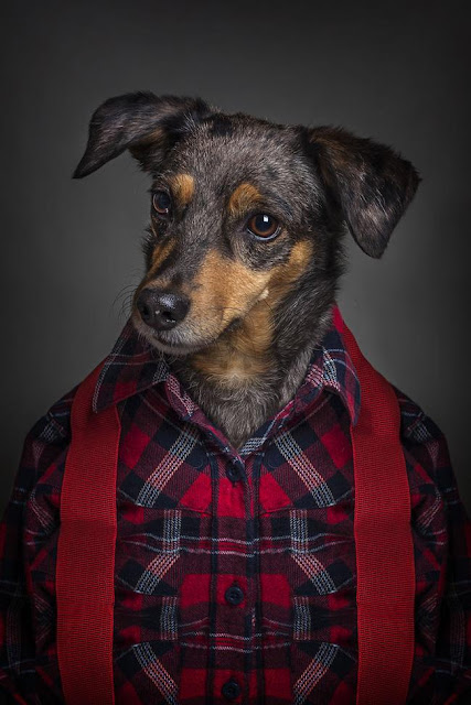 Khi chó ăn diện giống người, trông chúng cũng bảnh ra phết