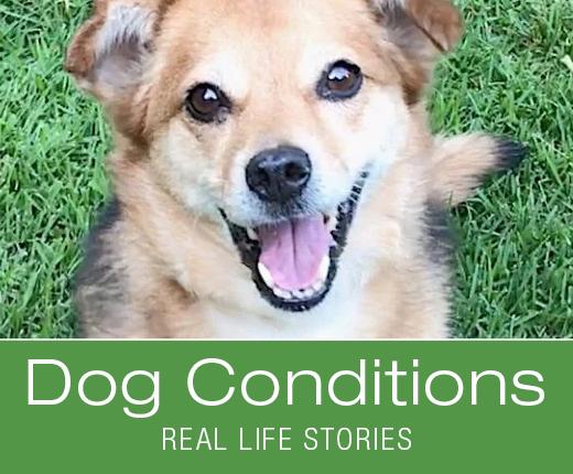 Dog Conditions: Real-Life Stories - Hemangiosarcoma