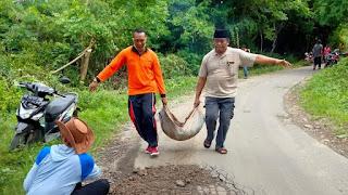 Kades Bilelando (peci hitam) bersama stap desa, saat melakukan gotong royong menimbun jalan jalan yang berlubang di jalur Bilelando menuju Dusun Kelongkong kemarin