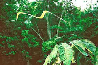 Serpiente voladora