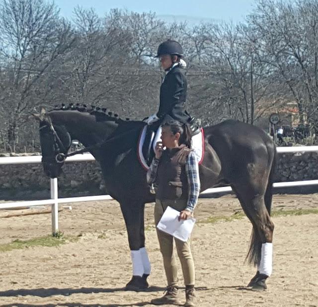 caballo preparado para salir a pista