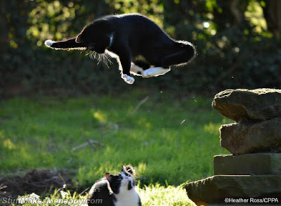 Super cat flies to the rescue