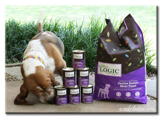 Bentley Basset smelling cans of Nature's Logic dog food