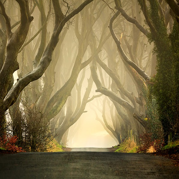 9. The Dark Hedges, Northern Ireland - Top 10 Scenic Rides