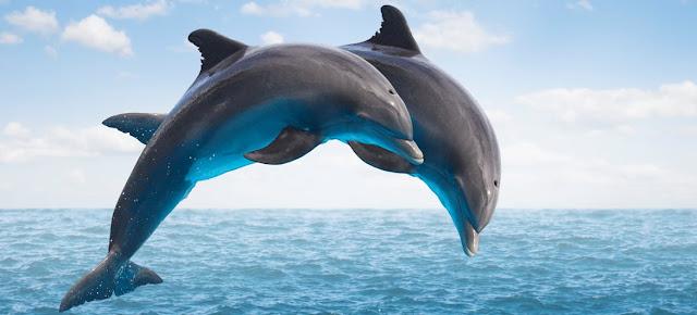 Dolphin Safari in Goa