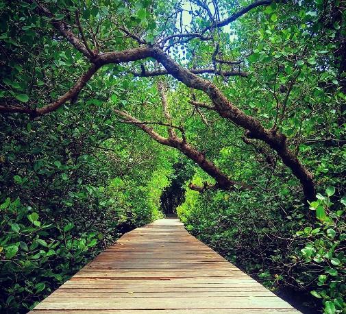 Daya Tarik Objek Wisata Hutan Mangrove Bali di Denpasar Bali - IhateGreenJello