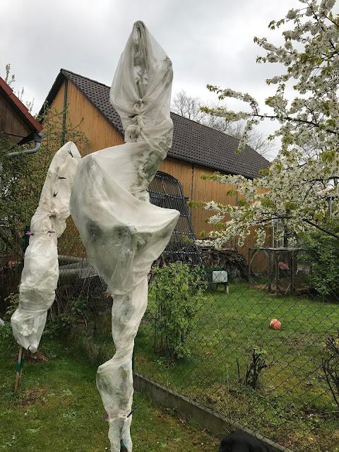 Frostschutz aus Vlies für die Säulenobstbäume (c) by Joachim Wenk