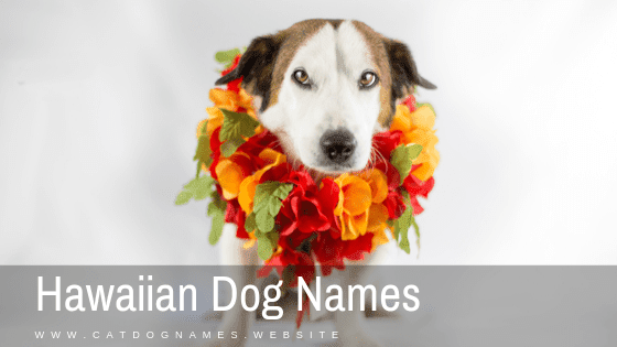 Hawaiian Dog Names For Male And Feamle Name List 2020