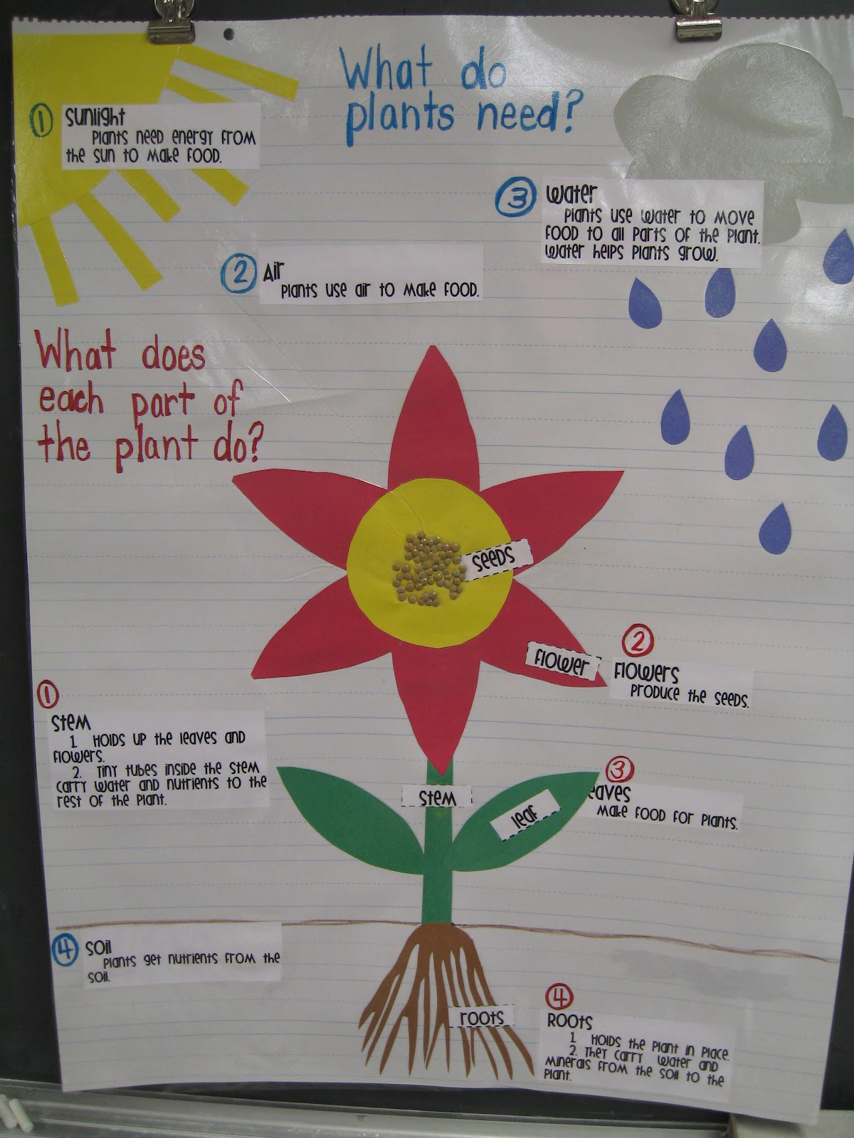 Plant Parts We Eat Worksheet