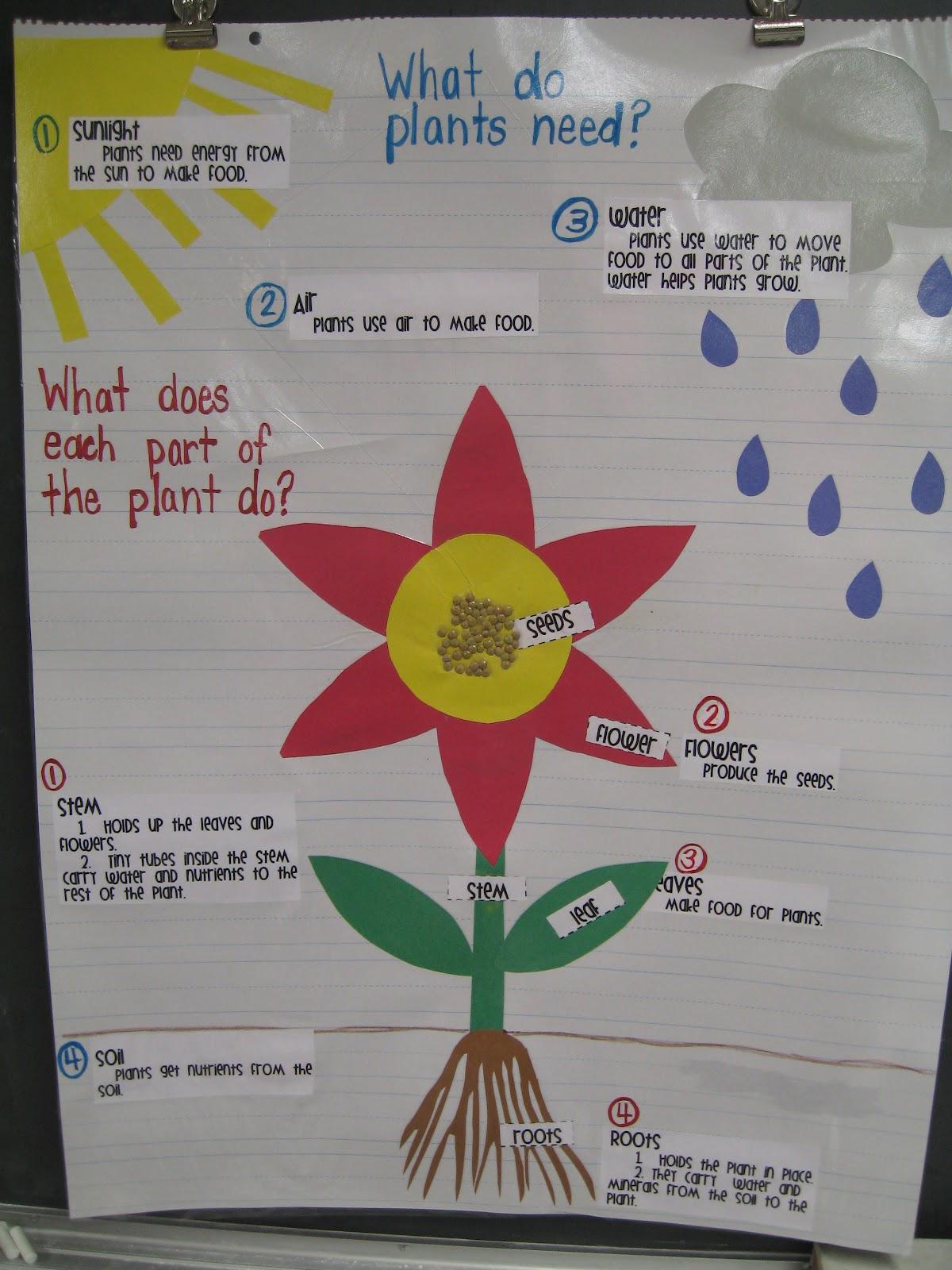 Plant Stuff | First Grade Shenanigans